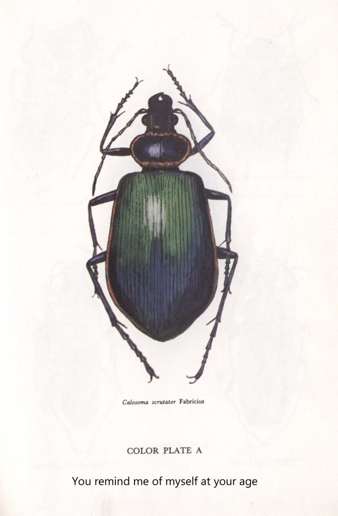 Beetles Series 5 (Jessy Randall)
